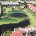 Algae bloom around docks in Florida in 2012. Photo by John Moran via wikimedia