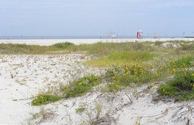 Large_beach_dunes