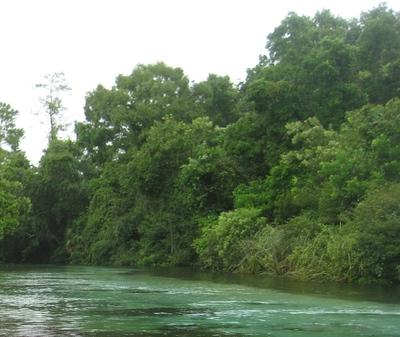 Large_weeki_wachee_river_12_aug_2014_sean_img_0268