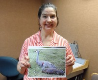 Medium_lela_lillyquist_brandon_wetlands_sandhill_cranes_sam_5006_small