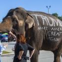 Donald Trump elephant