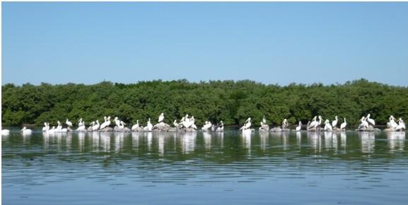 Bradenton mangroves Carlos Beruff Manatee County